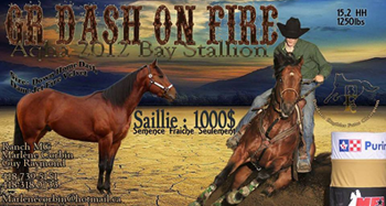 GR DASH ON FIRE . H, QUARTER HORSE
